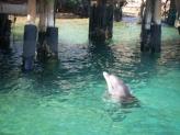 Дельфины. Эйлат. Сентябрь 2011.